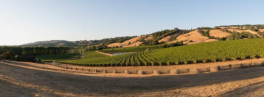 Navarro Vineyards United States California Philo