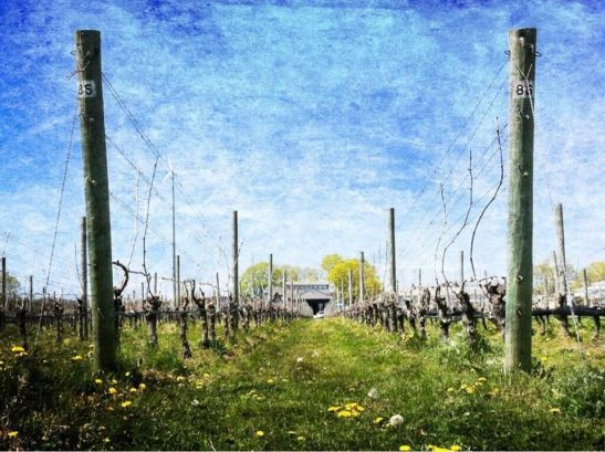 Shinn Estate Vineyards and Farmhouse United States New York Mattituck