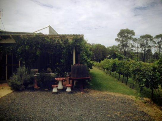 Wollombi Village Vineyard