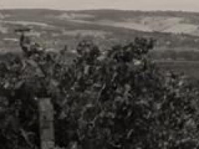 Labor Wines