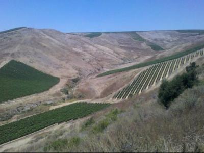 Siduri Wines