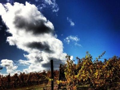 Fullerton Wines