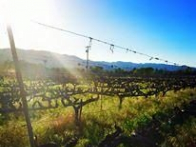 Honig Vineyard & Winery