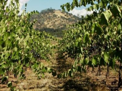 Chiarella Wines
