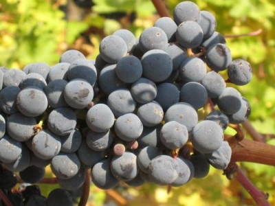 Frazier Winery