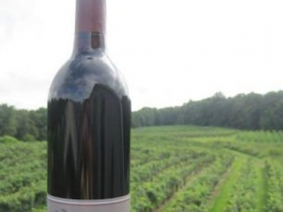 Gray Ghost Vineyards