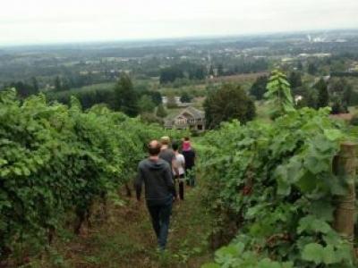 Rose & Fern Wines
