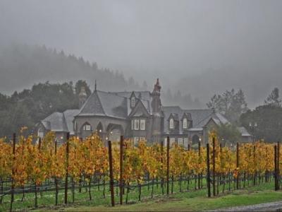 Ledson Winery and Vineyards