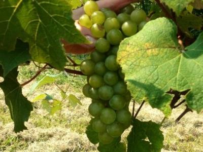 Red Barn Winery & Vineyards