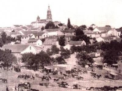 Toro Albá