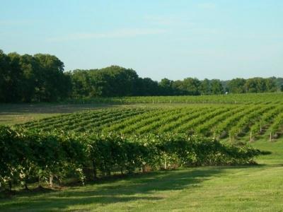 Nissley Vineyards & Winery