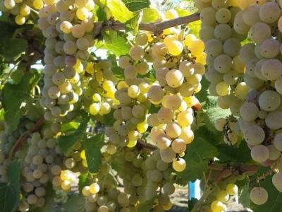 Rosedale Farms & Vineyards