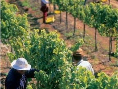 Laetitia Vineyard & Winery