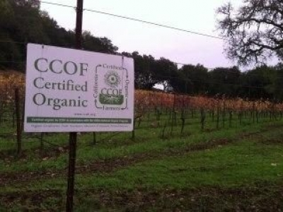Amapola Creek Vineyards & Winery