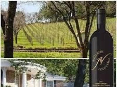 Andesite Vineyard