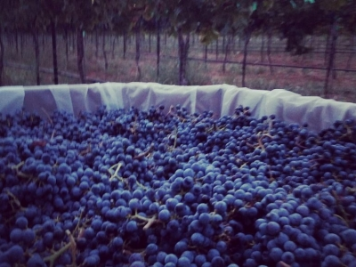 Trident Winery
