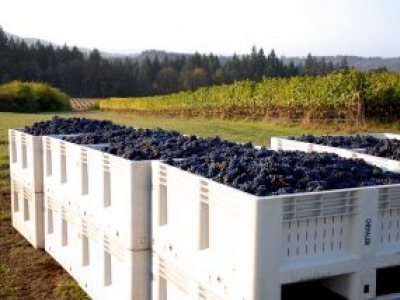 RR Winery, United States, Oregon, Newberg | Kazzit US