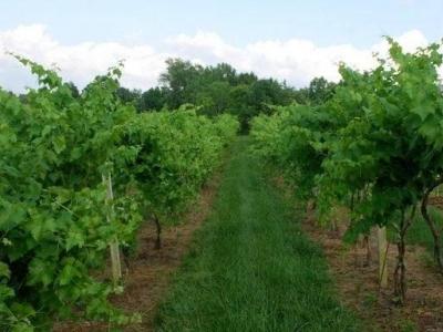 Seven Wells Winery