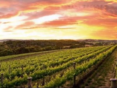 Allusion Wines