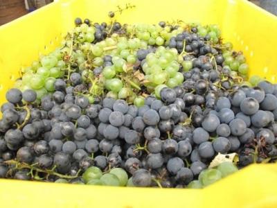 Boyden Valley Winery & Spirit