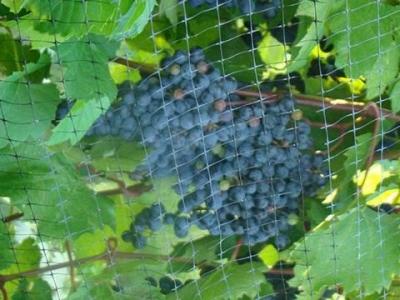 Chateau Tebeau Winery
