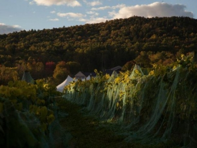 Cellardoor Winery