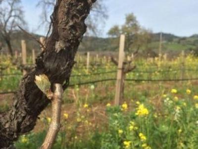 Seghesio Family Vineyards