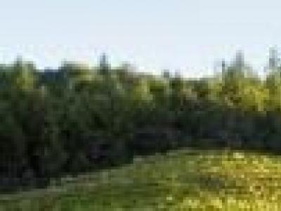 St. Clement Vineyards