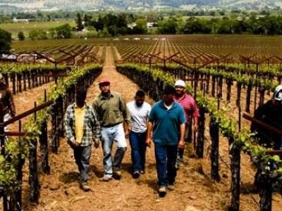 Staglin Family Vineyard