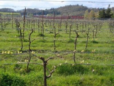 Keeler Estate Vineyard