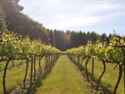 Siltstone Wines