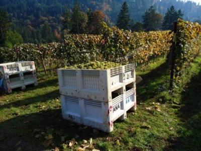 Thistle Wines