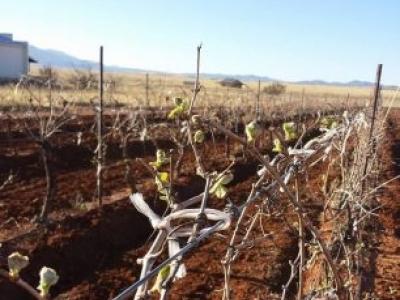 Callaghan Vineyards