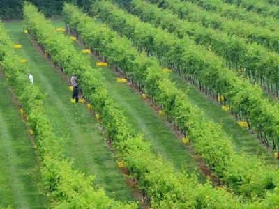 Clover Hill Vineyards and Winery