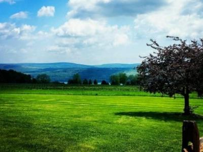 Castel Grisch Estate Winery