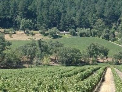 Match Vineyards