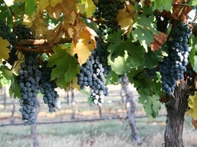 Brennan Vineyards