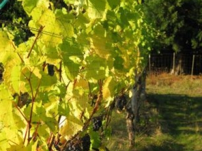 Freja Cellars & Freja Cellars United States Oregon Hillsboro | Kazzit US Wineries ...
