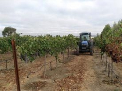 Rodrigue Molyneaux Winery