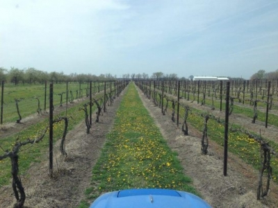 Davenport Orchards & Winery