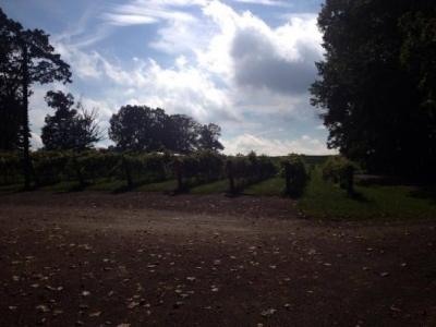 Sanders Ridge Vineyard and Winery