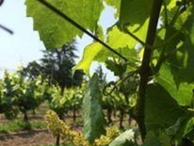 La Rochelle Winery