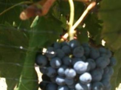 Blue Lotus Winery