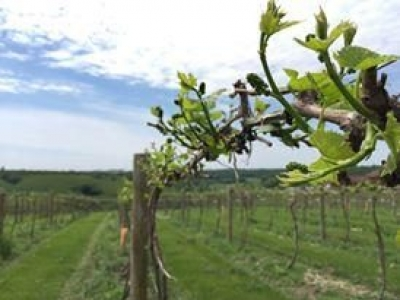 Calico Skies Vineyard & Winery