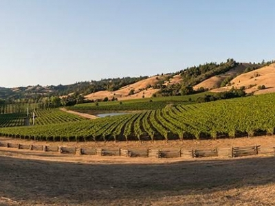 Navarro Vineyards United States California Philo