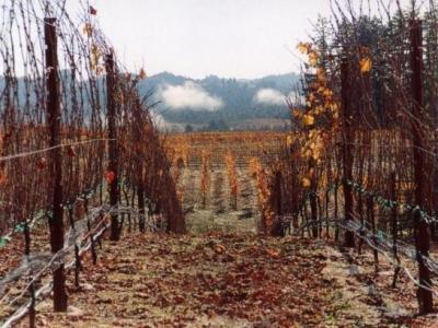 Peay Vineyards