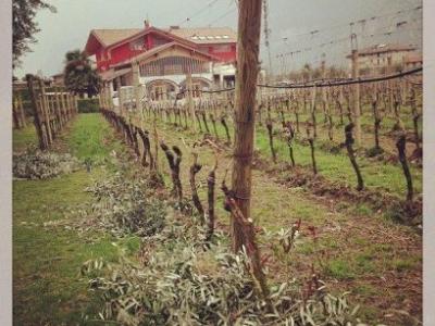 Pisoni Vineyards