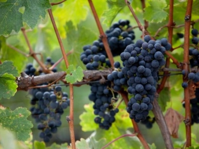 Lincourt Vineyards