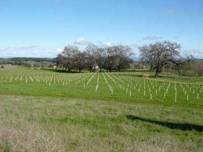 Ledge Vineyards