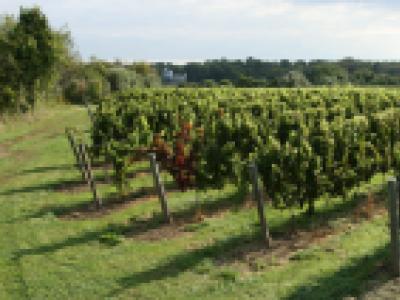 Saltwater Farm Vineyard